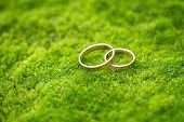 Wedding Rings On The Grass