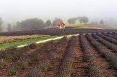 Field of Biei
