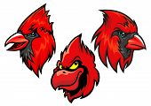 Cardinal bird heads set