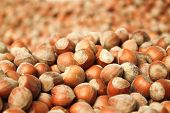 stock photo of ground nut  - hazelnuts background composed by many nuts laying on the ground