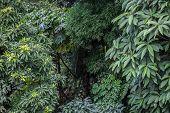 foto of darjeeling  - Green branches in rainforest outside Darjeeling India - JPG