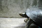 Turtle in the Concrete Jungle