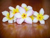 Plumeria Flowers On Wooden Background