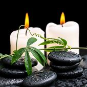 Spa Concept Of Green Twig With Tendril Passionflower With Drops And Candles On Zen Basalt Stones Bac
