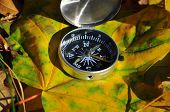 Compass On Fallen Leaves.