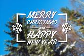 image of blue spruce  - Merry Christmas and New Year greeting card on blurred spruce or fir - JPG