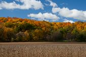 Fall colors over soybean field