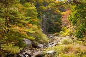 View Of Mountain Stream With Autumn Colors
