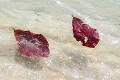 Leaves Swimming In The Ocean
