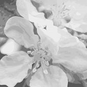 Abstract texture of apple blossom