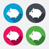 Piggy sign icon. Pork symbol.