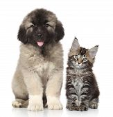foto of puppy kitten  - Puppy and kitten posing together on a white background - JPG