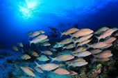 image of school fish  - School of fish - JPG