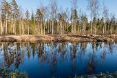 picture of scum  - reflections of trees in blue pond water - JPG