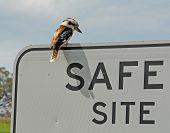 stock photo of kookaburra  - A Kookaburra surveys the sign that says save site - JPG