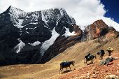stock photo of caravan  - Caravan in Cordiliera Huayhuash - JPG
