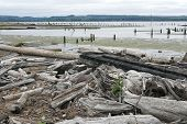 picture of driftwood  - a stack of driftwood on the beach - JPG