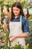 picture of flower shop  - Portrait of young female florist pruning rose in flowers shop - JPG