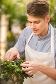 image of prunes  - Handsome male florist pruning a plant in the greenhouse - JPG