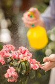 stock photo of flower shop  - Male florist spraying flowers in flower shop - JPG