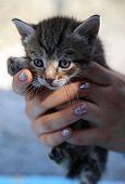 stock photo of homeless  - Little homeless kitten in the hands of a volunteer  - JPG