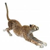 foto of cheetah  - 3D digital render of a cheetah isolated on white background - JPG