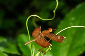 pic of dragonflies  - Red dragonfly in nature close up image - JPG