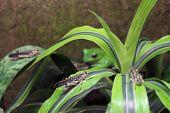 foto of locust  - A migratory locust  - JPG