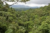 Rain Forest In Costa Rica