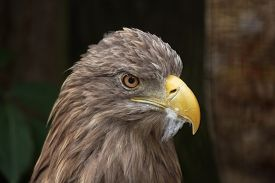 picture of eagles  - White - JPG