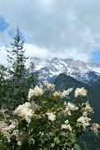 Flowering Shrub At Rainier Np