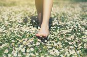 Childs feet in daisy closeup view. Shoeless boy walking on spring meadow. Little boy lying on summe poster