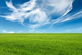 blue sky and green grass for successful advertisemen