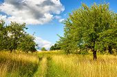 foto of apple orchard  - Apple orchard - JPG