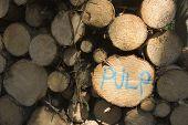 Zellstoff-Holz-Protokolle
