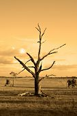 an old dead tree in the farmland in orange symbolising autumn (fall) or the end of an era