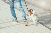 Man Walking With Dog On The Street. Friendship Concept. Sun Glare Effect poster