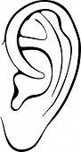Ouvido humano