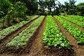 Farm of organic vegetables