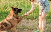 Obedient German Shepherd Dog With His Owner Practicing Paw Command. Happiness And Friendship. Pet An poster