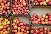 Red And Yellow Apples In Box,  Background. Fresh Apples Variety Grown In The Shop. Apple Suitable Fo poster