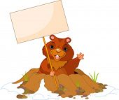 image of groundhog  - Cute Groundhog popping out of a hole with sign - JPG