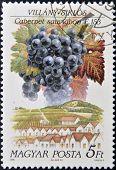 Hungria - por volta de 1990: Um selo imprimido em Hungria mostra fruta uva Cabernet sauvignon por volta de 1990