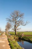 Narrow Road In A Polder Landscape