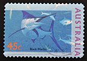 stamp printed in Australia shows Black Marlin