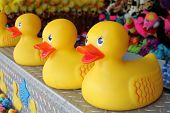 Rubber ducks in a row