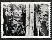 UNITED KINGDOM - CIRCA 2001: A stamp printed in Great Britain shows Cat at window circa 2001