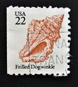 UNITED STATES OF AMERICA - CIRCA 1985: A stamp printed in USA shows shell of Frilled Dogwinke circa