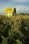 Corn Barn And Field