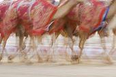 Dubai UAE Blurred motion of camels running during training at Nad Al Sheba Camel Racetrack